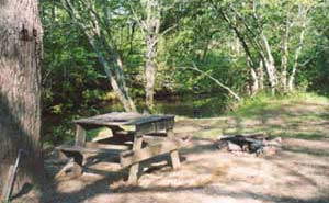 Nottely River Campground Campsites
